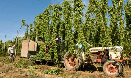 Hop-harvest c.terry williams